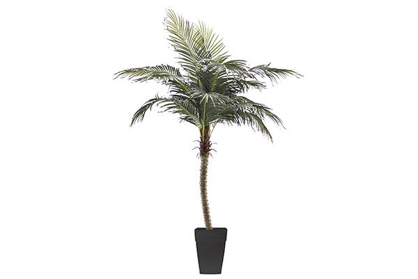 8″ Palm Phoenix