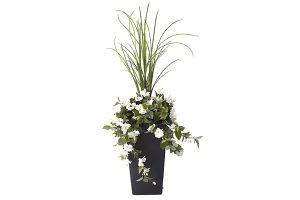 outdoor white hibiscus plant