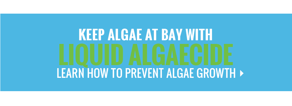 How to Remove Algae From Your Pool