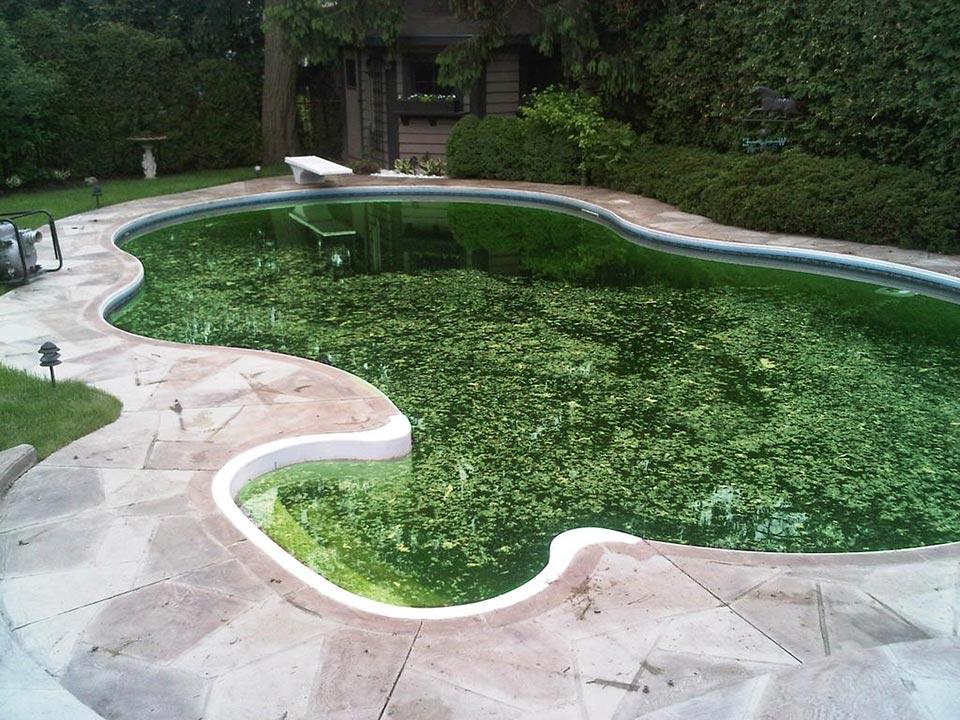 Step 1 - Super Chlorinate Your Pool