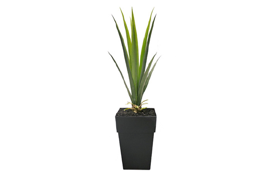 4 agave outdoor planter