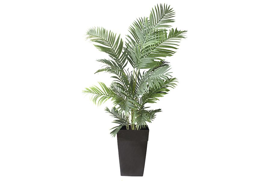 5' Areca Palm Planter