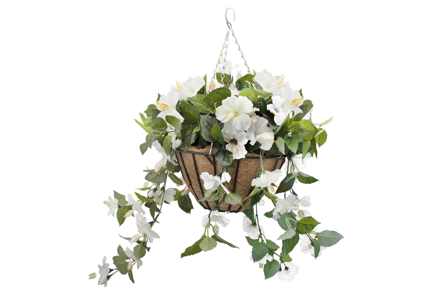 Hanging Basket White Hibiscus Flowers